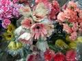 干玫瑰花瓣 3