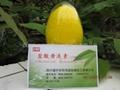 黃連素小檗碱