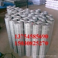 ga  anized wire mesh