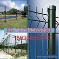 galvanzied and pvc wire mesh fence