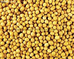 供应大豆异黄酮40% 大豆提取物