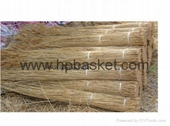 quality water reed