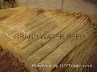 varous quality sweet water reed