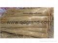 sweet water reed 3