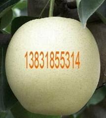 中国河北深州水果贸易