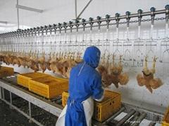 chicken broiler duck goose slaughtering line