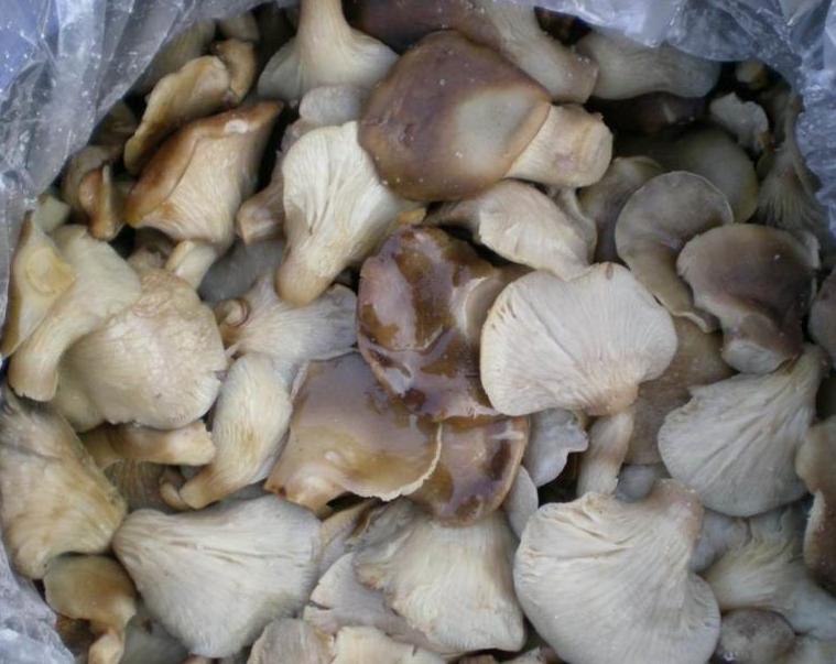Salted oyster mushroom 1