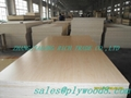Professional supplier of plywood