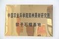 突尼斯軟籽石榴樹苗 5