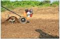 Micro cultivator