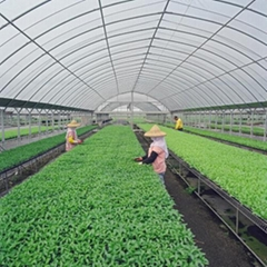 polycarbonate sheet for greenhouse