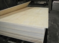cheap poplar plywood for packing