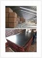Black film faced marine plywood 2