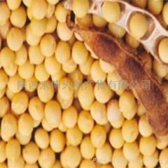 大豆異黃酮
