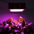 植物燈 1