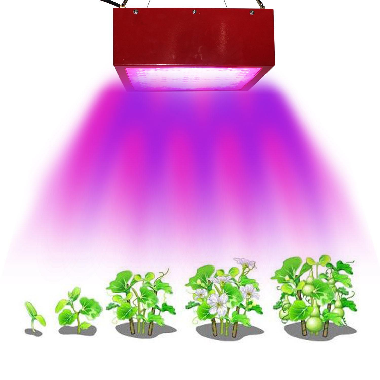 植物燈 6