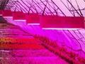 植物燈 8