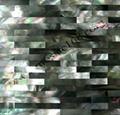 黄蝶贝裂纹拼装饰板 2