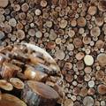 树枝装饰板 3
