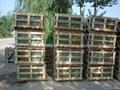 slate mosaic manufacture supply 4