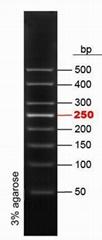 50bp DNA Ladder