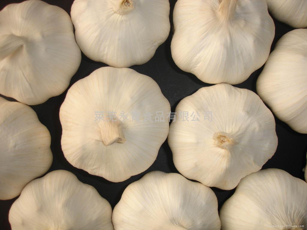 Garlic 4