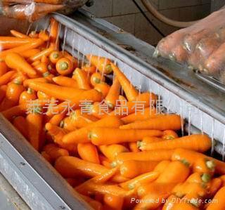 胡萝卜 2