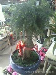 蘇州植物租賃