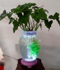 新型专利水培花卉玻璃花瓶