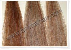 horse tail hair 5