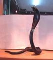 紅木雕蛇 5