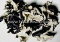 White-back black fungus cut 3