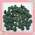 螺旋藻小球藻