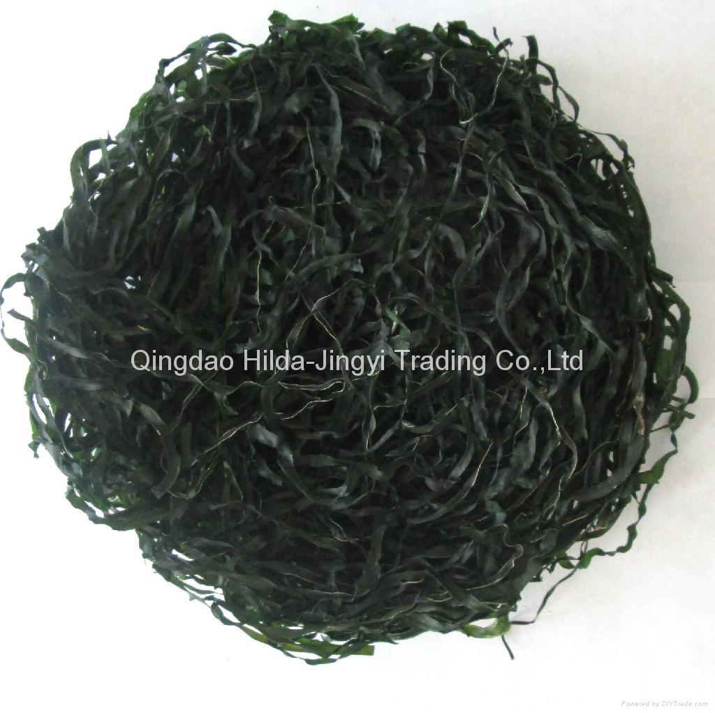 Shredded laminaria (machine dried)