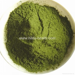 Organic young wheat leaves powder