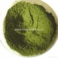 Organic Wheat Grass Powder 2