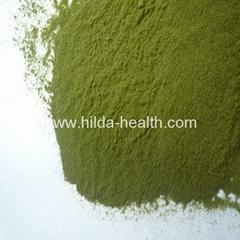 有机大麦绿素粉