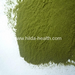 Organic Barley grass juice green powder