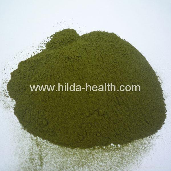 有機小麥苗提取物(麥綠素) 3