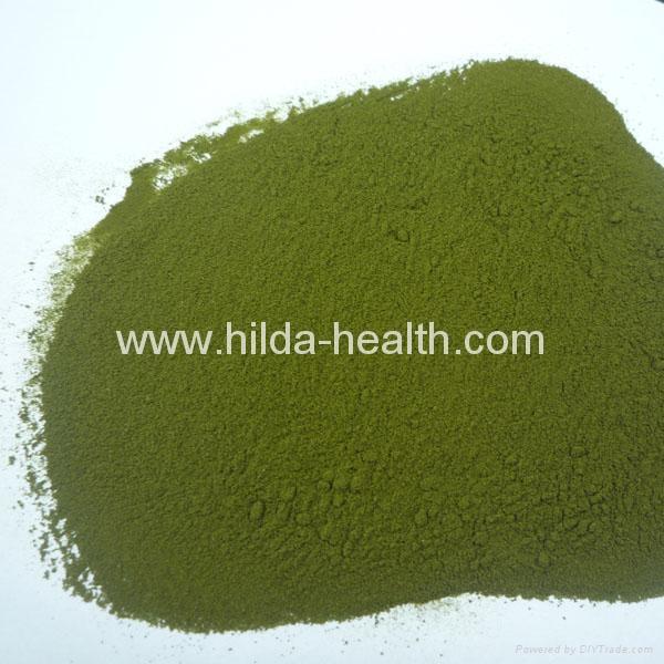 有機小麥苗提取物(麥綠素) 4