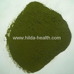 Organic wheat juice green powder