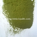 Organic wheat juice green powder 2