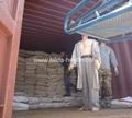 2020 crop Naturally dried laminaria cut