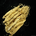Ginseng root extract(Ginsenoside)