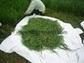Organic Barley grass juice green powder 3