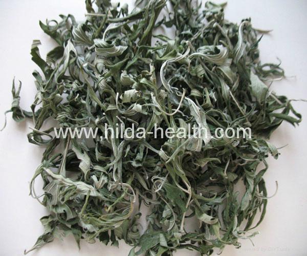 Wholesale High Quality Dried Herbal Leonuri Motherwort Natural Dried Leonurus Si 1