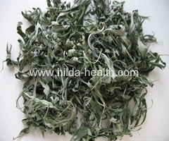 Wholesale High Quality Dried Herbal Leonuri Motherwort Natural Dried Leonurus Si