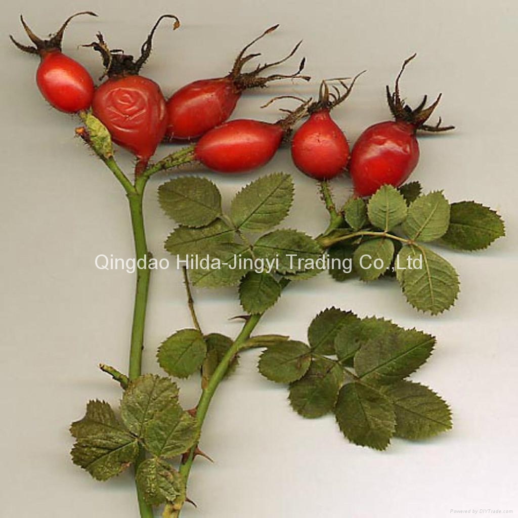 Fresh rosehip fruits