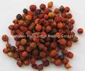 2019 crop dried wild rosehip fruits