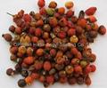 Un-assorted Rosehip fruits